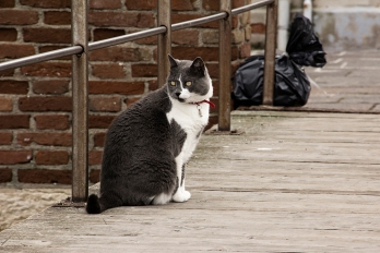 Cat ©photoblvd.ch