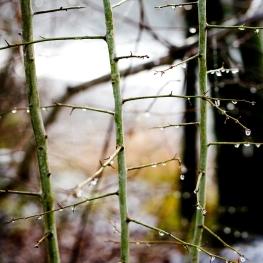 Naturschutzgebiet Rubigen ©photoblvd.ch