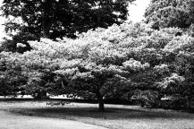 Kew Gardens ©photoblvd.ch