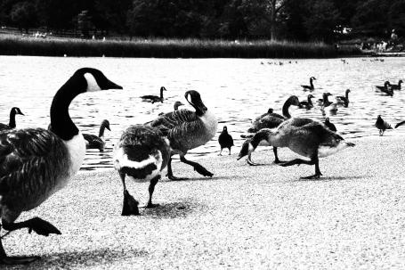 Hyde Park ©photoblvd.ch